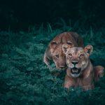 wildlife enamel pin