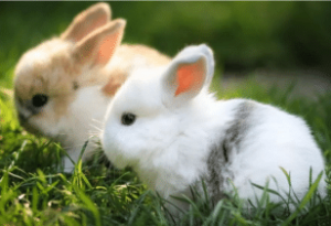 Two Little Rabbits